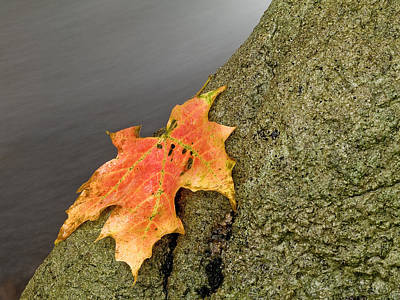 Photograph - Autumn Leaf Study by Jim DeLillo
