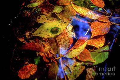 Photograph - Autumn Leaf by Tatsuya Atarashi