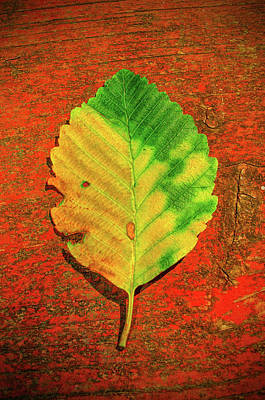 Photograph - Autumn Leaf Three by Tikvah's Hope