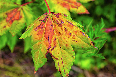 Photograph - Autumn Leaf by Tikvah's Hope
