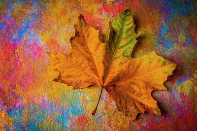 Photograph - Autumn Leaf Wonderful Colors by Garry Gay