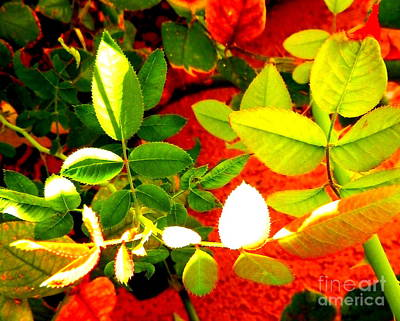Photograph - Autumn Leafs by L Cecka