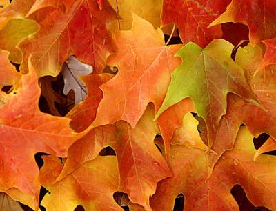 Autumn Leaves - Foliage Art Print by Dmitriy Margolin