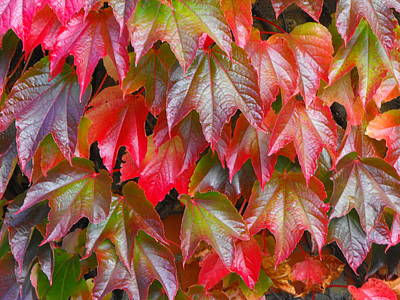 Photograph - Autumn Leaves 01 by Bob Williams