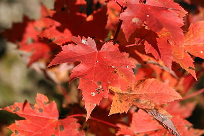 Photograph - Autumn Leaves 1 by George Jones