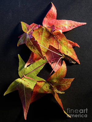 Photograph -  Autumn Leaves 1 by Werner Padarin