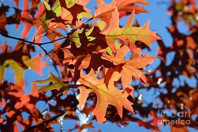 Autumn Leaves 17 Art Print by Jean Bernard Roussilhe