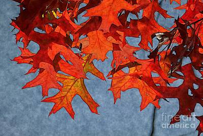 Autumn Leaves 19 Print by Jean Bernard Roussilhe