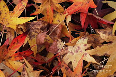 Photograph - Autumn Leaves 2 by Erica Hanel