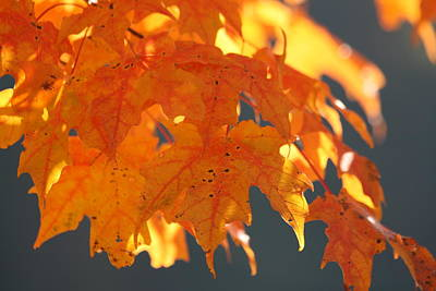 Photograph - Autumn Leaves 2 by George Jones