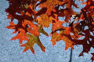 Digital Art - Autumn Leaves 20 by Jean Bernard Roussilhe