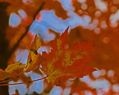 Photograph - Autumn Leaves 3 by Allen Beatty
