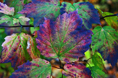 Photograph - Autumn Leaves 4 by Allen Beatty