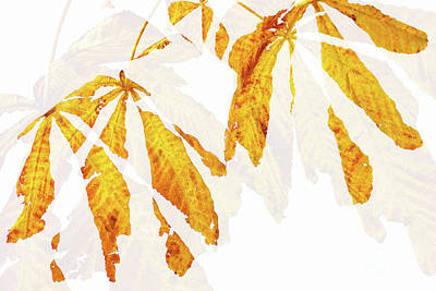 Autumn Leaves Abstract 2 Art Print