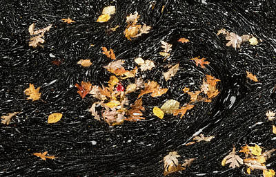 Photograph - Autumn Leaves Abstract by David Letts