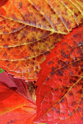Photograph - Autumn Leaves by Aidan Moran