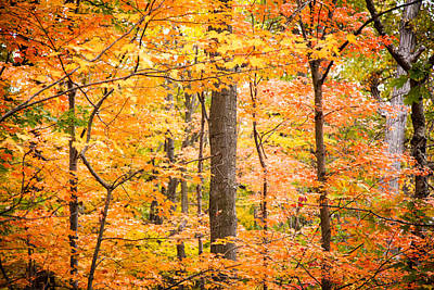 Nys Photograph - Autumn Leaves by Alexander Mendoza