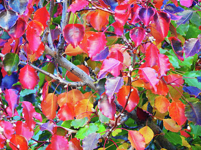 Photograph - Autumn Leaves And Buds by Mark Blauhoefer