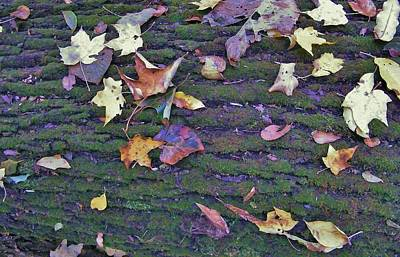 Autumn Leaves And Moss On Log   Indiana Art Print by Rory Cubel