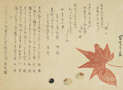 Oriental Art Photograph - Autumn Leaves And Nuts by Ko Sukoku II