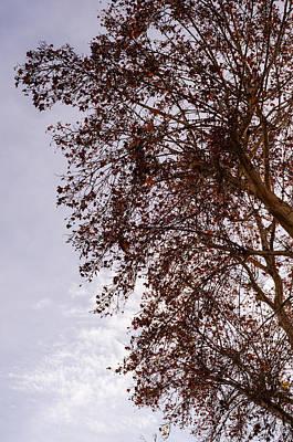 Photograph - Autumn Leaves by Andrea Mazzocchetti