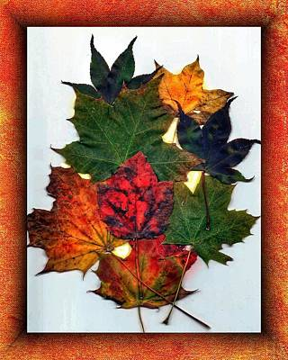 Photograph - Autumn Leaves by Anne Sands