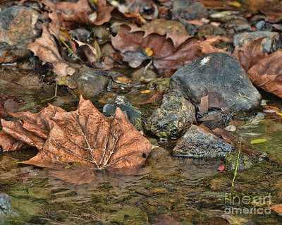 Photograph - Autumn Leaves At Edge Of Water by Kerri Farley