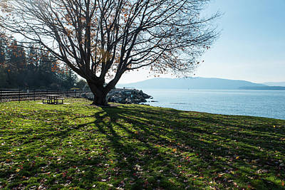 Photograph - Autumn Leaves At Marine Park by Tom Cochran