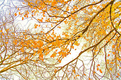 Calendar Photograph - Autumn Leaves by Az Jackson