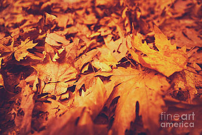 Photograph - Autumn Leaves Background by Anna Om