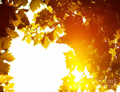Autumn Leaves Background Art Print