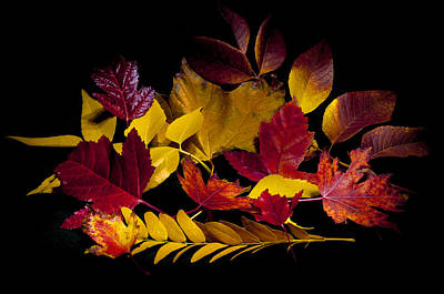 Photograph - Autumn Leaves by Barry C Donovan