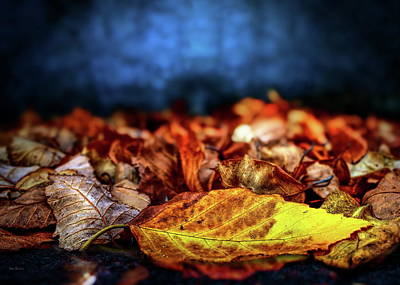 Photograph - Autumn Leaves by Bob Orsillo