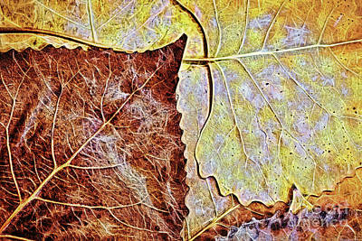 Digital Art - Autumn Leaves Brown And Gold by Sharon McConnell