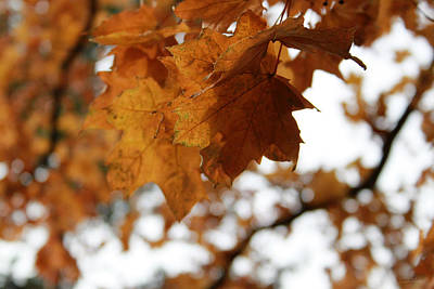 Royalty-Free and Rights-Managed Images - Autumn Leaves- by Linda Woods by Linda Woods