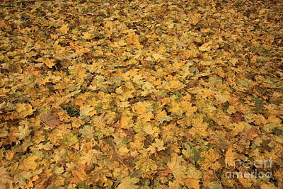 Photograph - Autumn Leaves Canvas by Carol Groenen