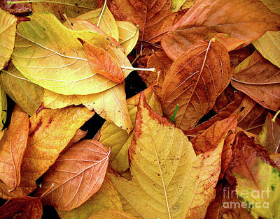 Autumn Leaves Print by Carlos Caetano