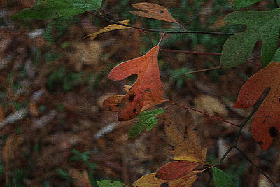 Photograph - Autumn Leaves by Cathy Harper
