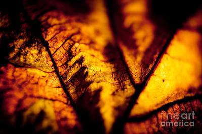 Autumn Leaves Closeup Print by Raimond Klavins