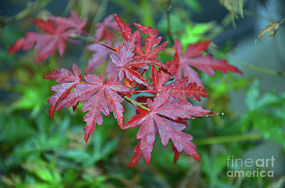 Photograph - Autumn Leaves by Debby Pueschel