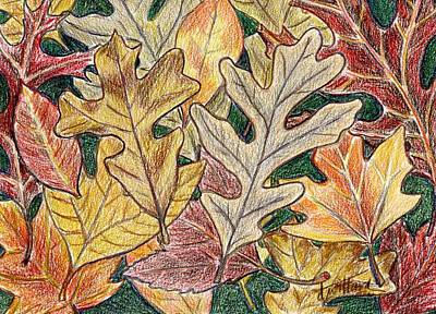 Drawing - Autumn Leaves by Deborah Willard