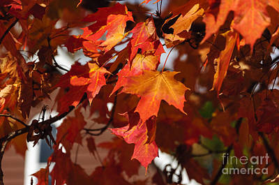 Photograph - Autumn Leaves by Debra Fedchin