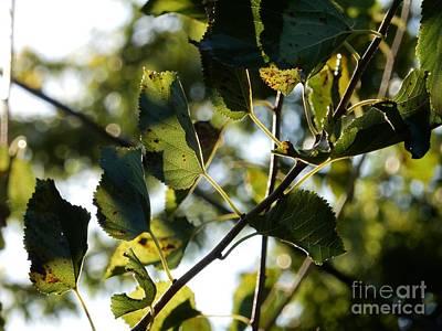 Photograph - Autumn Leaves by Diamante Lavendar