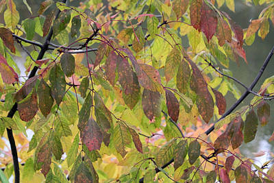 Print featuring the photograph Autumn Leaves by Doris Potter
