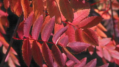 Photograph - Autumn Leaves by Douglas Pike
