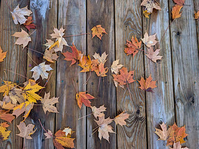 Photograph - Autumn Leaves Fall by Ant Pruitt