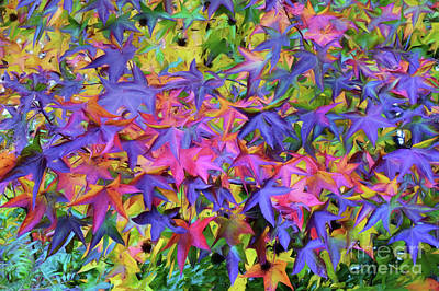 Photograph - Autumn Leaves - Fall Color by Scott Cameron