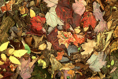 Photograph - Colorful Autumn Leaves In Blue Green Red Yellow Orange by Peter Potter