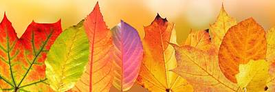 Painting - Autumn Leaves by Fine Art Photography