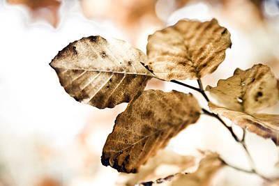 Autumn Leaves Art Print by Frank Tschakert